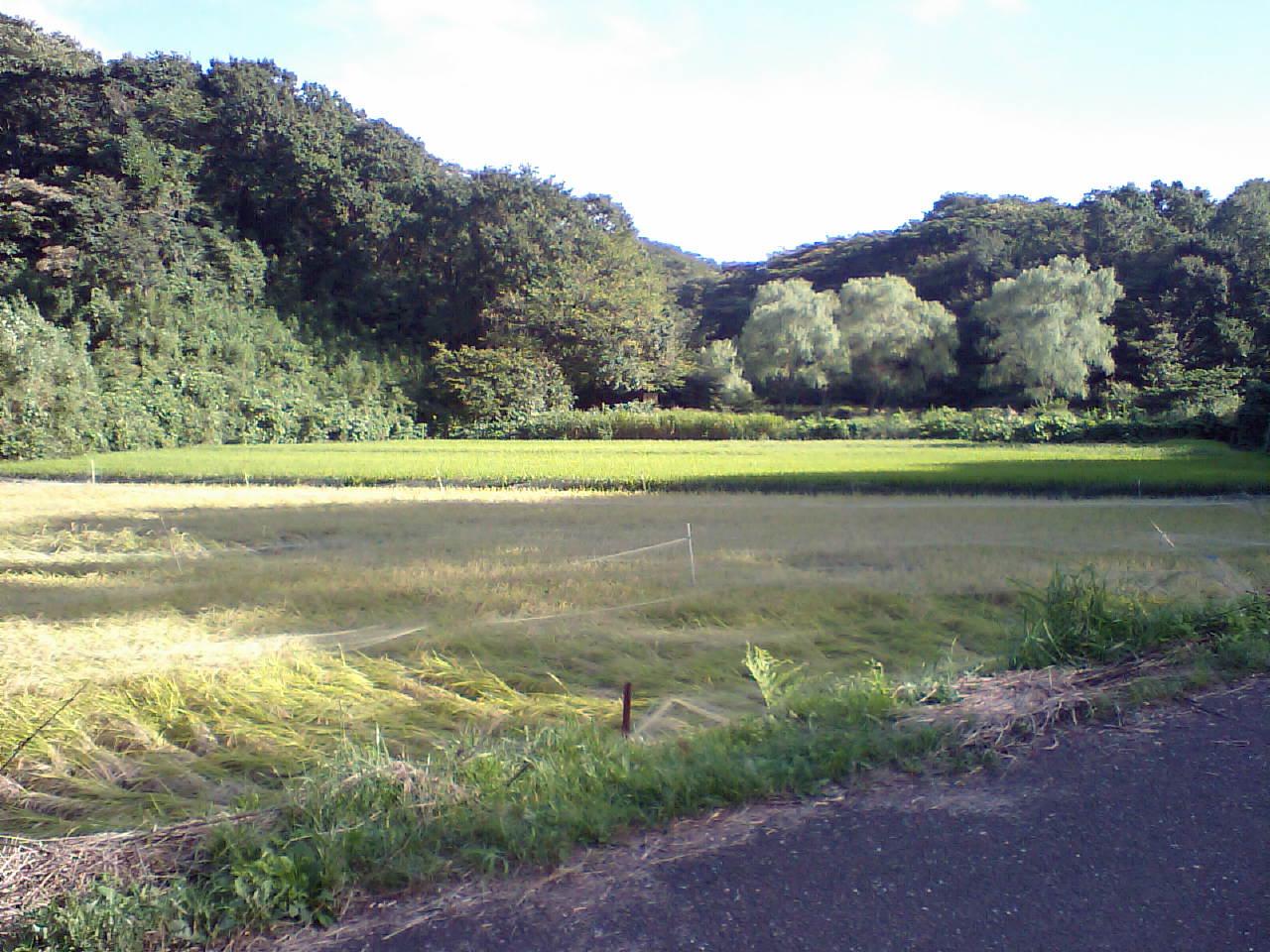 20070916 (15).JPG